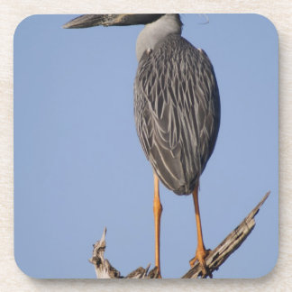 Yellow-crowned Night-Heron, Nyctanassa violacea, Beverage Coaster