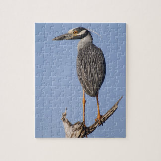 Yellow-crowned Night-Heron, Nyctanassa violacea, Jigsaw Puzzle
