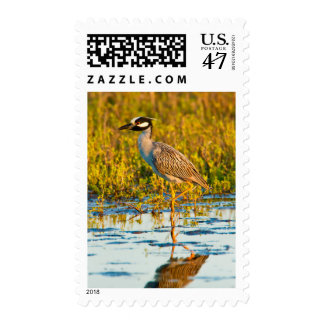 Yellow-Crowned Night-Heron (Nyctanassa Violacea) Postage