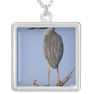 Yellow-crowned Night-Heron, Nyctanassa violacea, Square Pendant Necklace