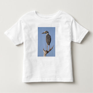 Yellow-crowned Night-Heron, Nyctanassa violacea, Toddler T-shirt