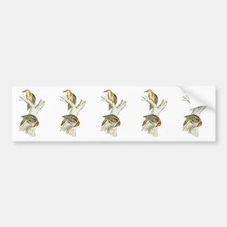 Yellow-crowned or Mahratta Woodpecker Car Bumper Sticker
