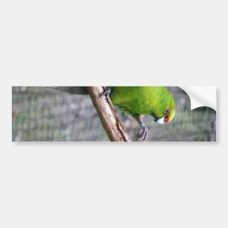 Yellow-crowned Parakeet Bumper Sticker