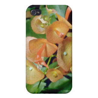 yellow Cup and saucer (Holmseioldia manguinea) flo iPhone 4 Cover