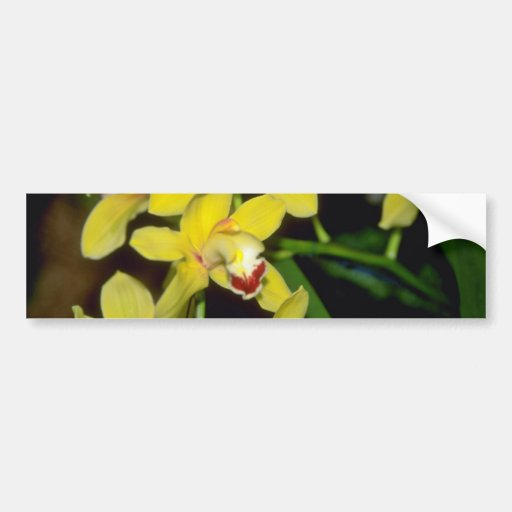 yellow Cymbidium flowers Car Bumper Sticker