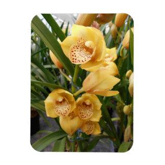 Yellow Cymbidium Orchids Magnet