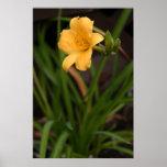 Yellow daffodil flower print