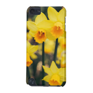 Yellow Daffodil Flowers Blooming In Spring iPod Touch 5G Cover
