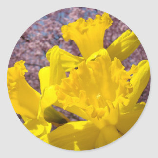 Yellow Daffodil Flowers stickers Envelope seals