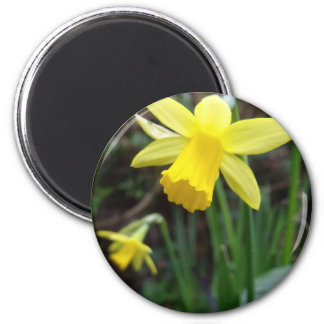 Yellow Daffodil In Soft Focus Design 2 Inch Round Magnet