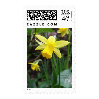 Yellow Daffodil In Soft Focus Postage Stamp