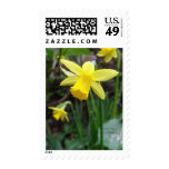 Yellow Daffodil In Soft Focus Postage Stamps
