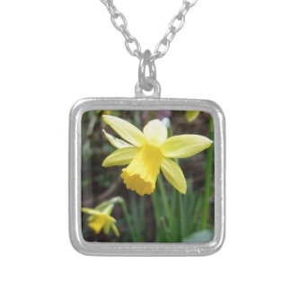 Yellow Daffodil In Soft Focus Silver Plated Necklace