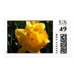 Yellow Daffodil Postage