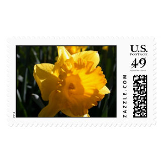 Yellow Daffodil Postage Stamp