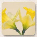 Yellow daffodils beverage coaster