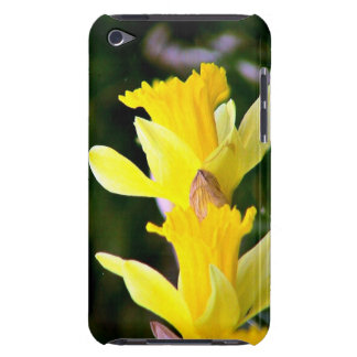 Yellow Daffodils blossoming on a sunny day iPod Case-Mate Cases