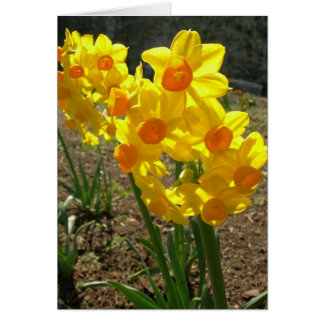 Yellow Daffodils Card
