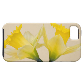 Yellow daffodils iPhone 5 cover