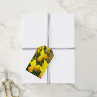 Yellow Daffodils Floral Photo Gift Tags