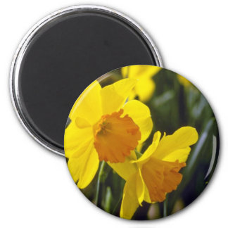 yellow Daffodils flowers Refrigerator Magnets