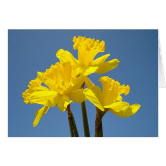 Yellow Daffodils Greeting Cards Custom Spring