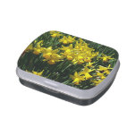 Yellow Daffodils I Cheery Spring Flowers Candy Tin