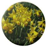 Yellow Daffodils I Cheery Spring Flowers Chocolate Covered Oreo