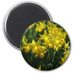 Yellow Daffodils I Cheery Spring Flowers Magnet