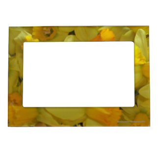 Yellow Daffodils Magnetic Photo Frames