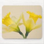 Yellow daffodils mousepads