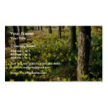 yellow Daffodils near Pine Forest, Notts, England Business Cards