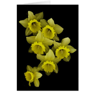 Yellow Daffodils On Black Card