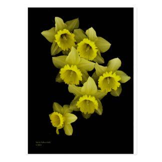 Yellow Daffodils On Black Post Card