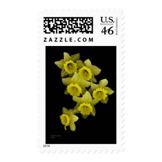 Yellow Daffodils On Black Stamp