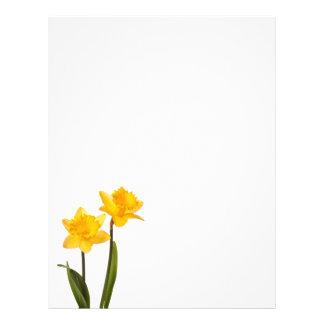 Yellow Daffodils on White - Daffodil Flower Blank Letterhead