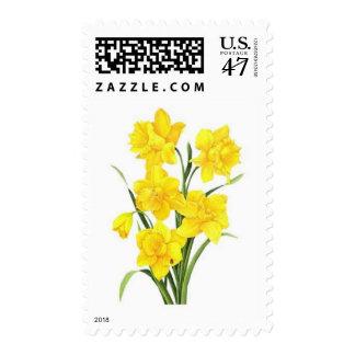 Yellow daffodils postage stamp