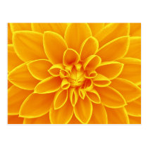 Yellow dahlia flower postcard