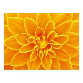Yellow dahlia flower postcard