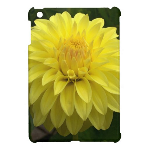 Yellow Dahlia On multiple Products iPad Mini Cases