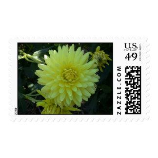 Yellow dahlia photo postage stamp