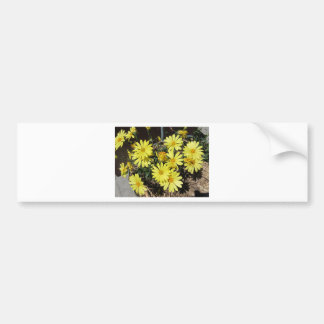 Yellow  Daisies Bumper Sticker