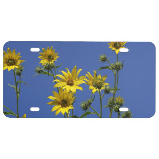 Yellow daisies flowers License Plate