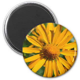 Yellow Daisies in the Mountains Santa Fe magnet