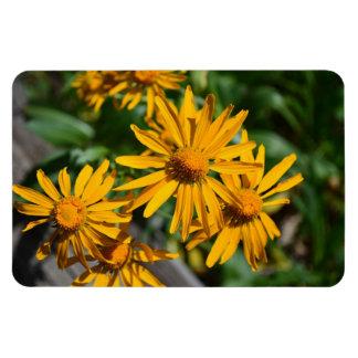 Yellow Daisies in the Mountains Santa Fe Rectangular Photo Magnet