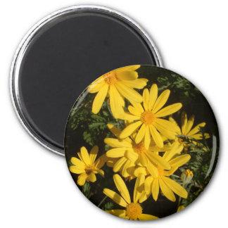 Yellow Daisies Magnet