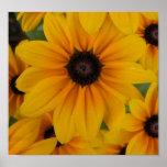 yellow daisies print