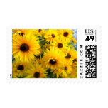 Yellow Daisies Stamp Postage Stamps