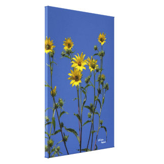 Yellow daisies Stretched Canvas Print