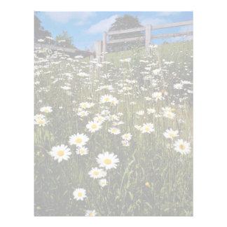 Yellow Daisies, the Quantocks, Somerset, England f Letterhead